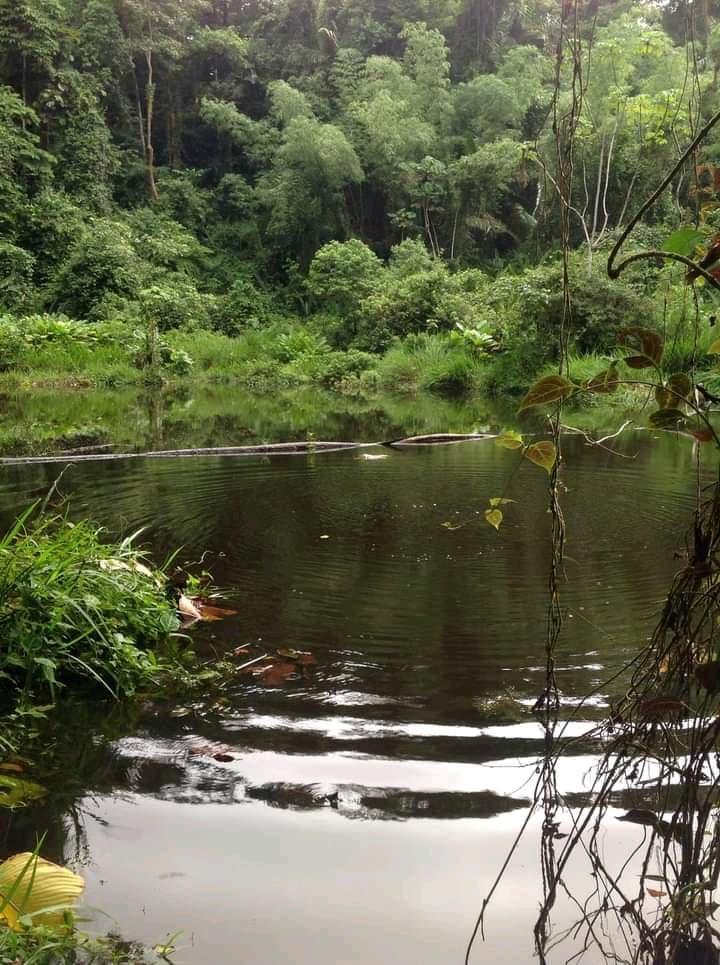 Day 1 - Ilukulín river